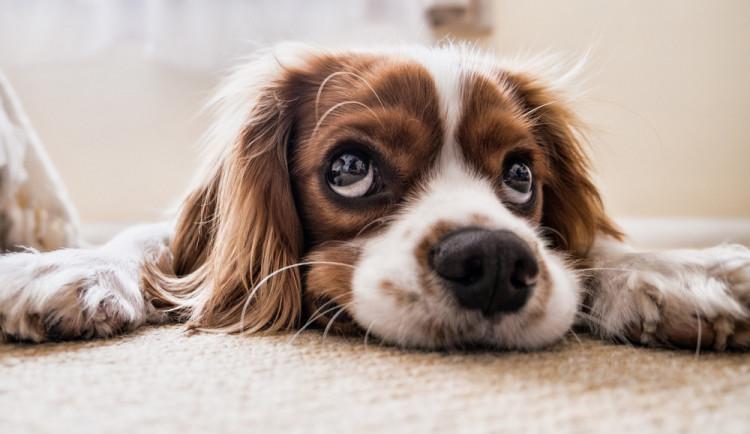 Královéhradecký psí útulek v areálu bývalých vojenských skladů pomohl již tisícům psů