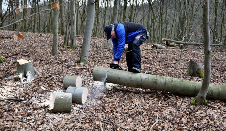 Tak dlouho chodil do lesa a kácel cizí dřevo, až mu hrozí pět let za mřížemi