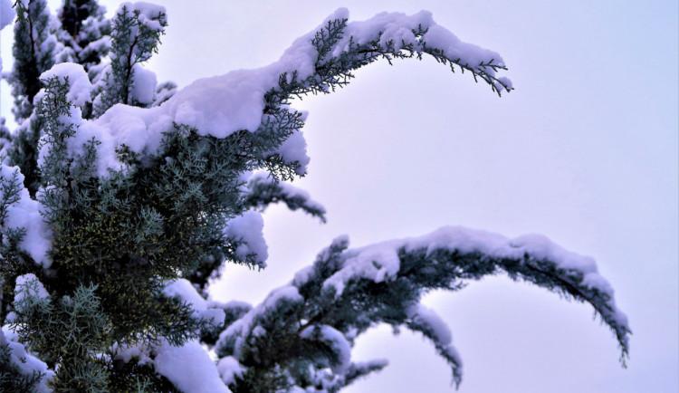 V Krkonoších hrozí kvůli mokrému sněhu pády stromů