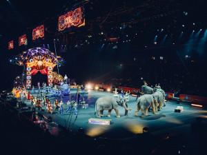 Divoká zvířata do šapitó nepatří, kampaň chce Cirkusy bez zvířat! Podporují ji i známé osobnosti