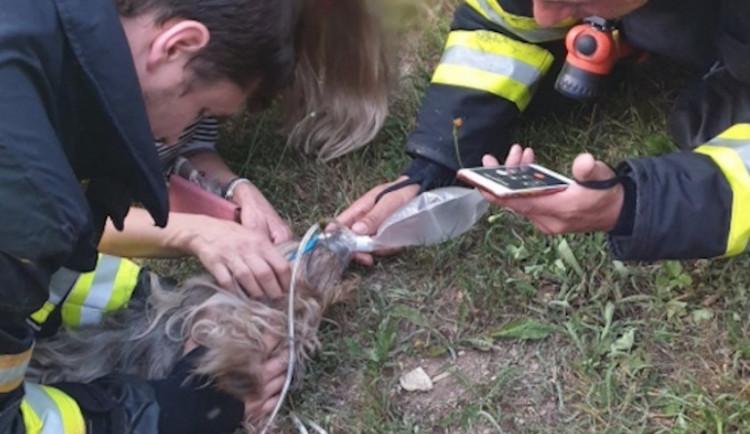 V Krkonoších hořela chalupa. Hasiči z objektu zachránili bezvládného psa majitelů