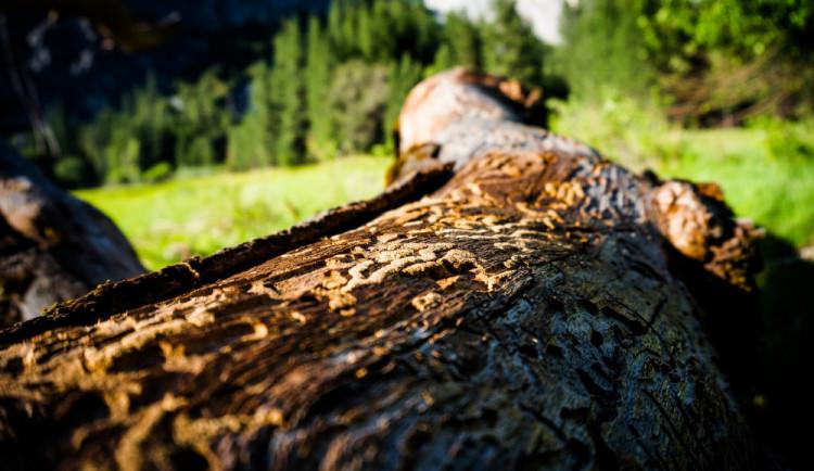 Kůrovcová kalamita je obrovským problémem. Lesy ČR chystají dlouholetý tendr