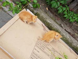 Koťata, které byla u popelnic naštěstí nejsou odhozená, patří místním