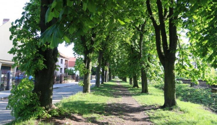 Příroda musí ustoupit. Kvůli dvojkolejce do Opatovic půjde k zemi přes tři tisíce stromů