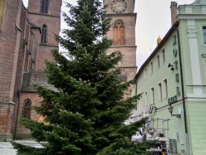 Na náměstí v Hradci již stojí jeden z vánočních stromů