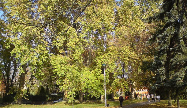 Hradec chystá opravu Kubištových sadů za deset milionů. Park se dočká obnovy po sto letech