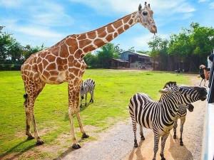 Do dvorské Zoo loni přišlo nejvíce lidí za posledních deset let