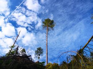 Vichřice Sabine poničila v KRNAP asi 5000 metrů krychlových dřeva