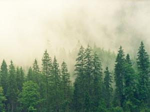 Státní Lesy ČR dají lidem možnost sázet nové lesy