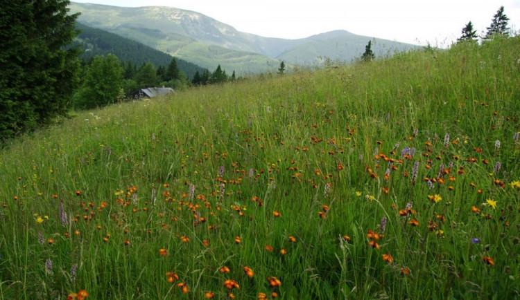 Mimořádná opatření mají dopady i na vzácnou horskou loku v Krkonoších. Správci se o ni musí starat sami. Pomoc ze škol chybí