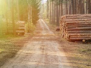 Lesy ČR obnovily samovýrobu, dřevo zlevnily až o 40 procent