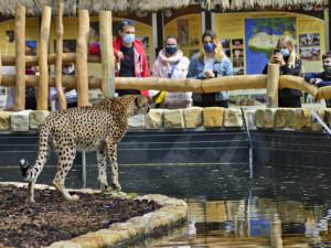 Zoologická zahrada má unikátní výběh pro gepardy. Od návštěvníků je dělí pouze voda