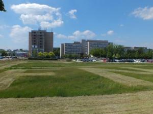 FOTO: Pracovníci technických služeb poděkovali zdravotníkům hradecké Fakultní nemocnice. Na trávníku jim vysekali modrou hvězdu života