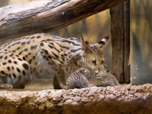 Dvorská zoo dala 26 milionů do expozic šelem, vodních světů a ptáků