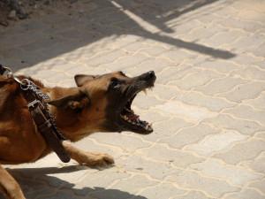 Strojvedoucího pokousal ve Staré Pace pes, osobní vlak nabral skluz