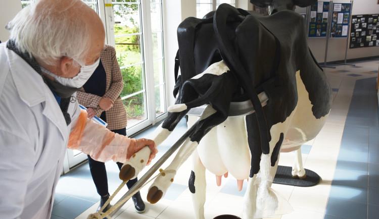 Studenti veterinární školy v Hradci Králové mají netradiční pomůcku. Na modelu krávy se učí rodit tele