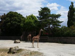 Na pokrytí ztrát způsobených v době koronaviru dá kraj dvorské zoo 13 milionů korun