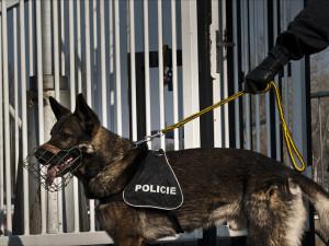 Řidič bez papírů se policii pokusil schovat ve křoví. Policejní pes ho našel za pár minut
