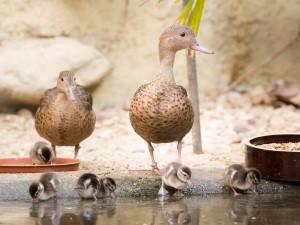 Zoologická zahrada ve Dvoře Králové zažívá babyboom. Ptačí pavilon praská ve švech