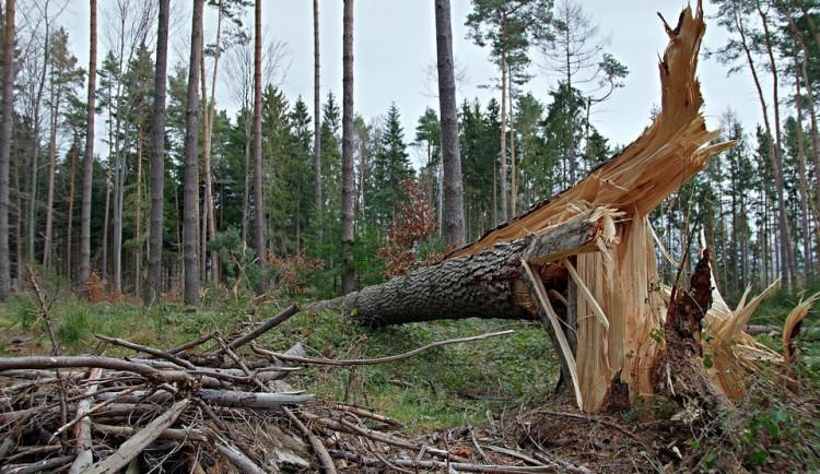 Silný vítr dnes v Královéhradeckém kraji lámal stromy. V hradecké nemocnici poničil auta