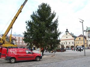 Dvůr už hledá vánoční strom na náměstí T.G.Masaryka