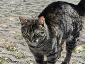 Náchod má řešení na problematiku toulavých koček, nechá je kastrovat