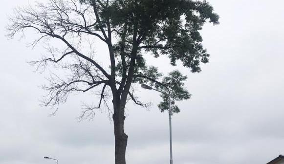 Město Trutnov se chce soudit. Někdo chemikálií ničí jasan v Horním Starém Městě