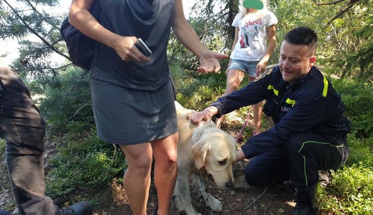 Pes se propadl do pět metrů hluboké skalní průrvy. Ven ho vytáhli až hasiči se speciálním vybavením