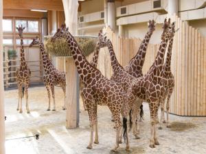 Safari Park Dvůr Králové měl navzdory koronaviru rekordní návštěvnost