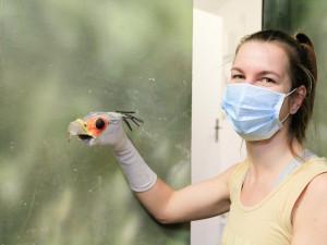 O vzácné ptáče se ve Dvoře Králové stará maňásek vyrobený z ponožky
