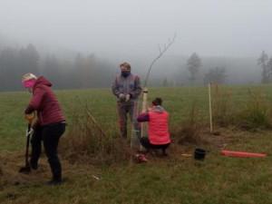 V Trutnově vysázeli 19 stromů a více než sto keřů