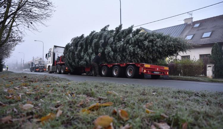 Na Velkém náměstí v Hradci Králové stojí vánoční strom. Rozsvítí se v neděli
