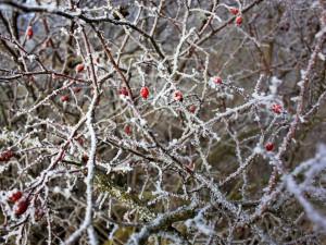 Do Česka dorazí silné mrazy. Teploty mají klesnout až k mínus dvaceti stupňům