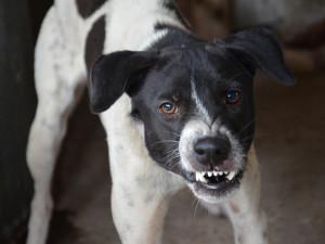 Majitel špatně uvázal svého psa. Ten pokousal malého chlapce, který se mu snažil utéct