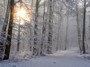 POČASÍ NA NEDĚLI: Mírné ochlazení a více slunce