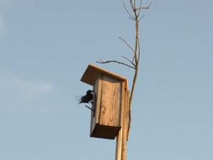 Ve Dvoře Králové podporují hnízdění ptáků, rozmístili tu už 114 budek