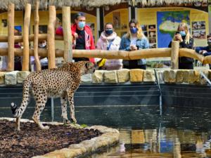 Pandemie stála Safari Park přes 30 milionů korun. Přežít ji pomáhají příznivci, darovali několik milionů