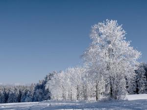 Po zbytek března ještě může v noci mrznout, objeví se i sníh
