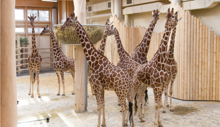 Safari Park řeší existenční krizi. V krajním případě se začne zbavovat svých zvířat
