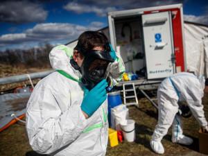 Likvidace chovu kachen zasažených ptačí chřipkou bude pokračovat zítra