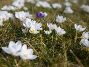 POČASÍ NA SOBOTU: Dorazí jarní počasí. Teploty u 18 stupňů