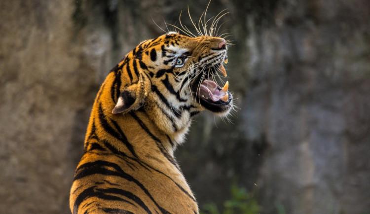 Během prvního dne přišlo do Safari Parku přes 400 lidí. Platí přísná pravidla