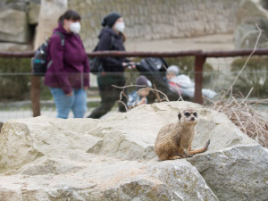 Podpora lidí udržela Safari Park nad vodou. Za rok zahradě poslali přes 30 milionů korun