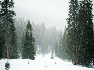 Zima se ještě neloučí. Na některých místech Krkonoš je půl metru sněhu