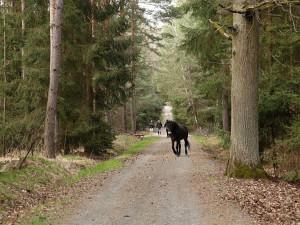 Mejdan v ohradě s divokými koňmi. Parta si Na Plachtě uspořádala nevšední večírek, jeden kůň utekl