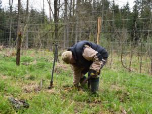 Městské lesy zalesňují plochy po těžbě dřeva, zasadí 47 tisíc stromků