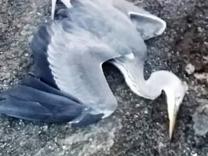 V Krkonoších řádil pytlák. Postřelil chráněného čápa a usmrtil volavku