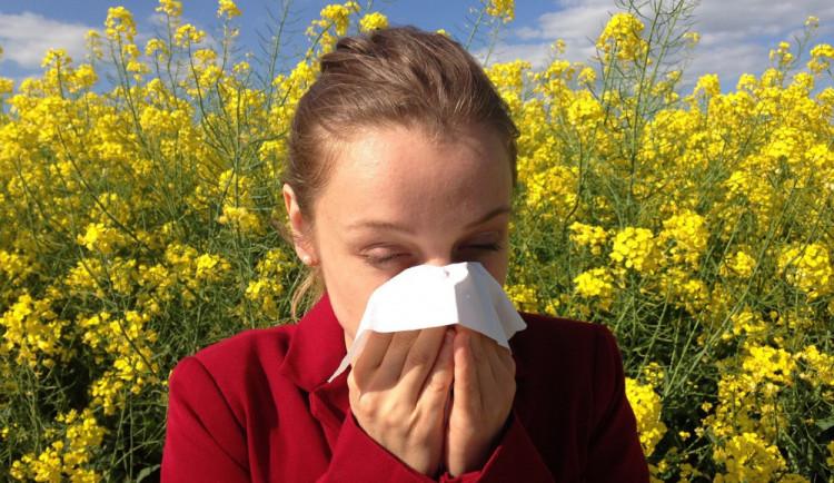 Alergie nás může zaskočit v každém věku, nejčasněji lidi trápí pyly a roztoči