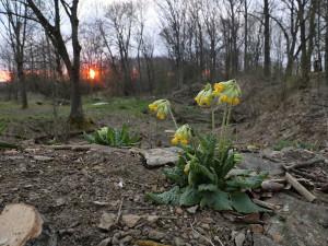 Ochránci přírody prosí o pomoc s výkupem přírodní rezervace, ze které Hradec čerpá pitnou vodu