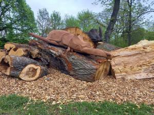 Trutnov má unikátní broukoviště. Radnice využila pokácené stromy z okolí